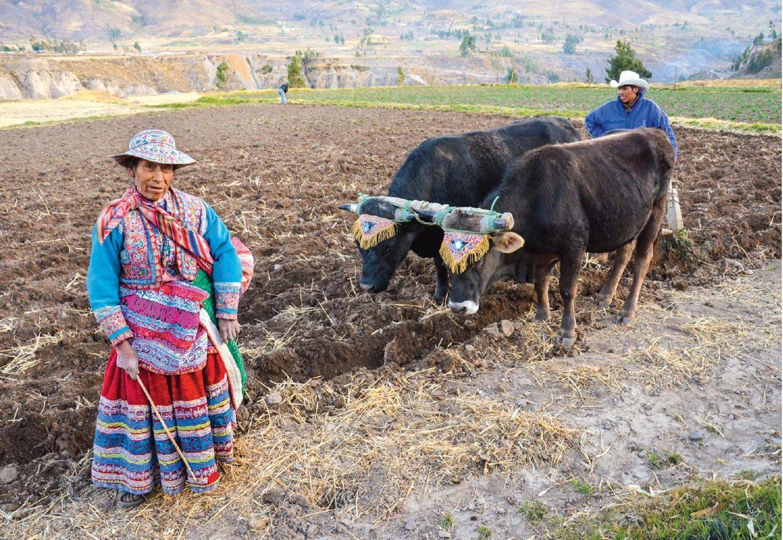 Agricultoras peruanas