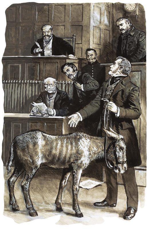 Richard Martin devant le tribunal avec un âne négligé