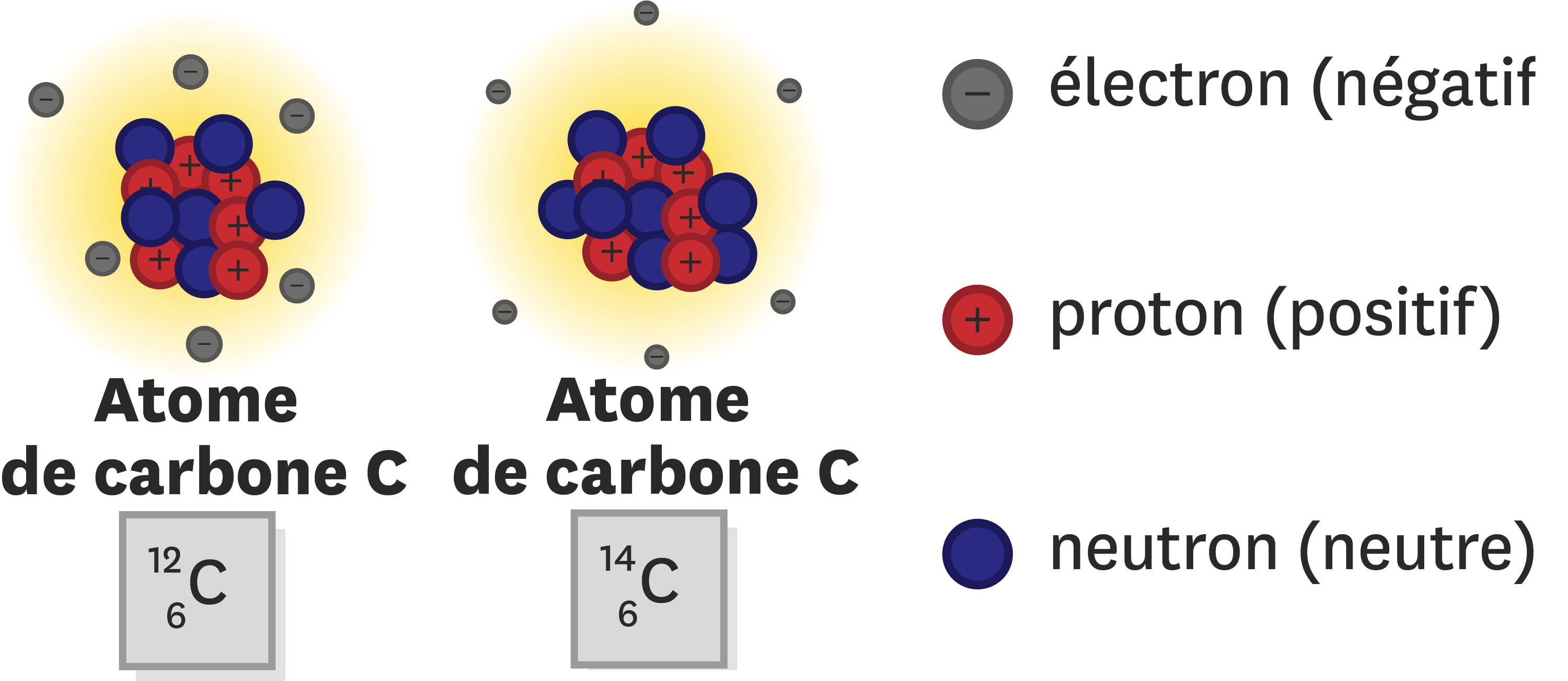 Description de la composition des atomes de carbone 12 (de symbole 12C) et carbone  (de symbole 14C).