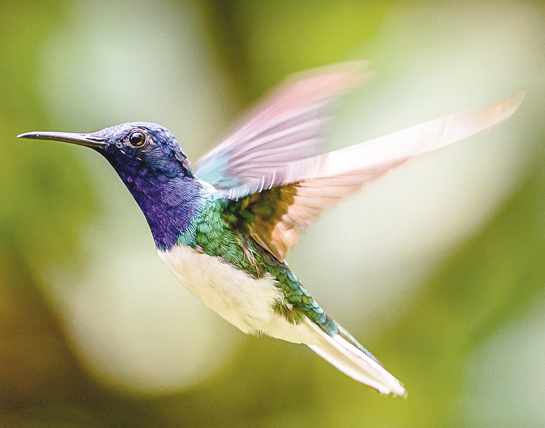Le vol du colibri.