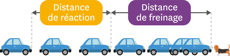 Distance de réaction et distance de freinage.