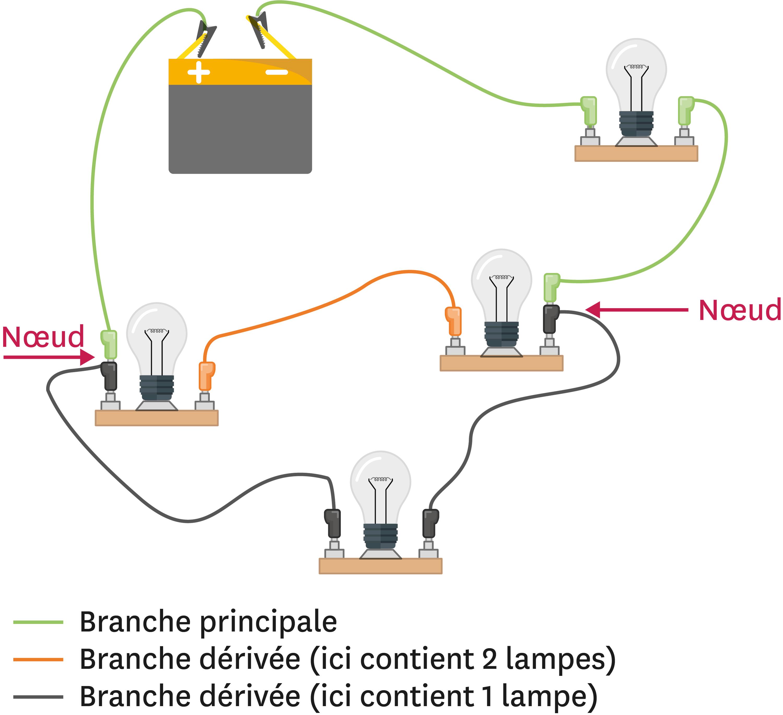 Les branches dans un circuit électrique.