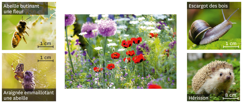 Quelques espèces observées dans un jardin.