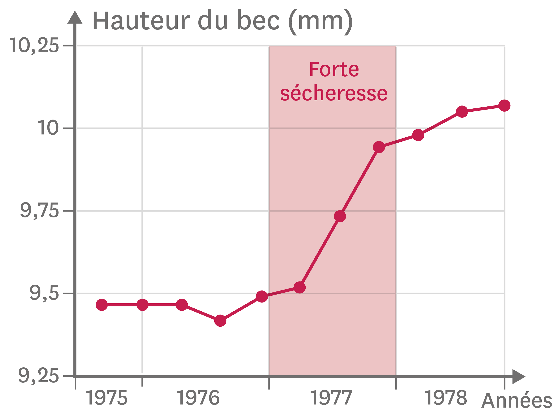 La taille du bec chez les pinsons entre 1975 et 1979.
