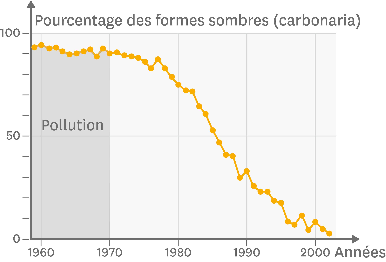 L'évolution de la fréquence de la couleur sombre chez la phalène du bouleau au cours du XXe siècle.