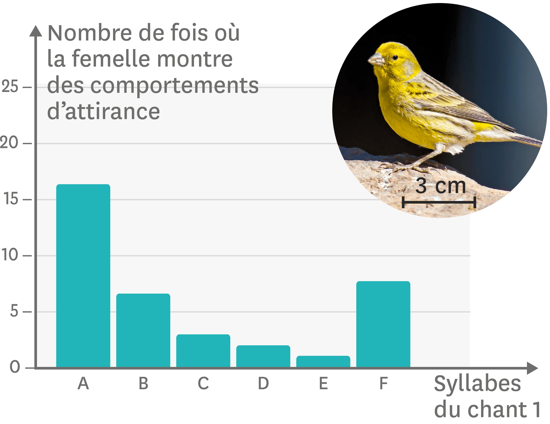 Les effets des différentes syllabes du chant 1 sur l'attirance des femelles.
