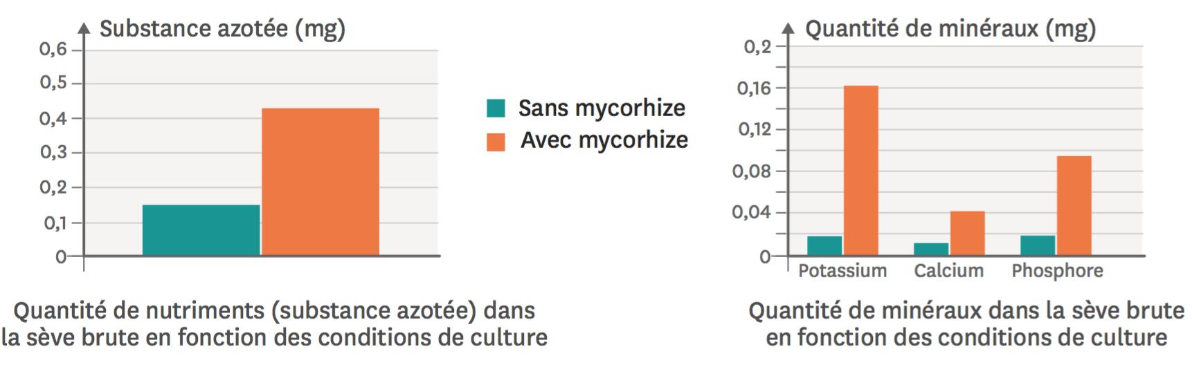 La quantité de nutriments et de sels minéraux (calcium, phosphore et potassium) dans la sève brute du pin en présence et en absence de mycorhize.