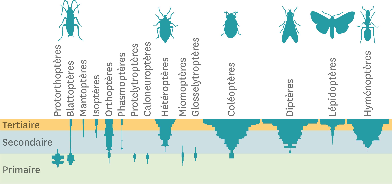 La diversité des insectes au cours de l'histoire de la Terre.
