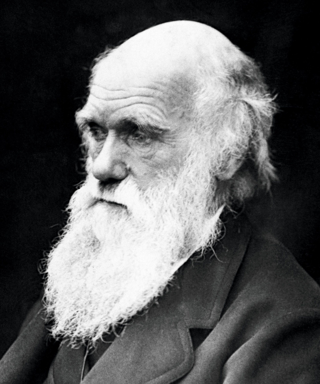 Le principe de la sélection naturelle énoncé par Darwin.