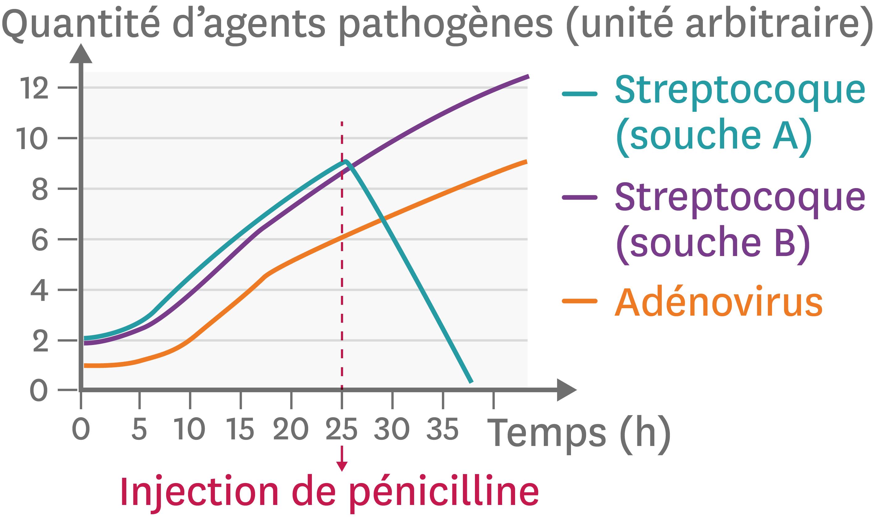 L'effet d'un antibiotique (la pénicilline) contre deux souches différentes d'une bactérie ou un virus.