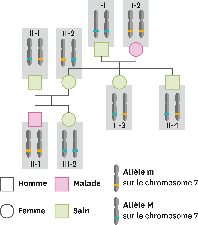 Les allèles présents et les caractères correspondants dans une famille dont certains membres ont la mucoviscidose.