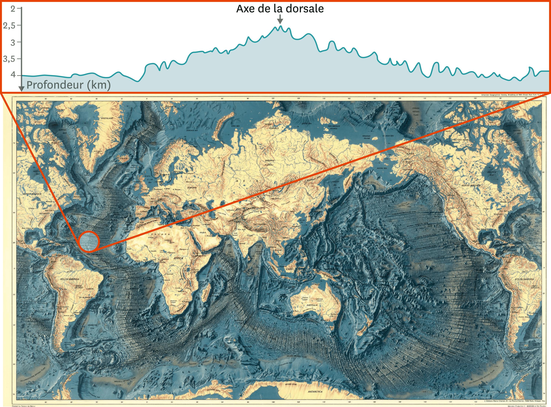 La carte des reliefs des fonds marins et une coupe au niveau de la dorsale Atlantique Nord.