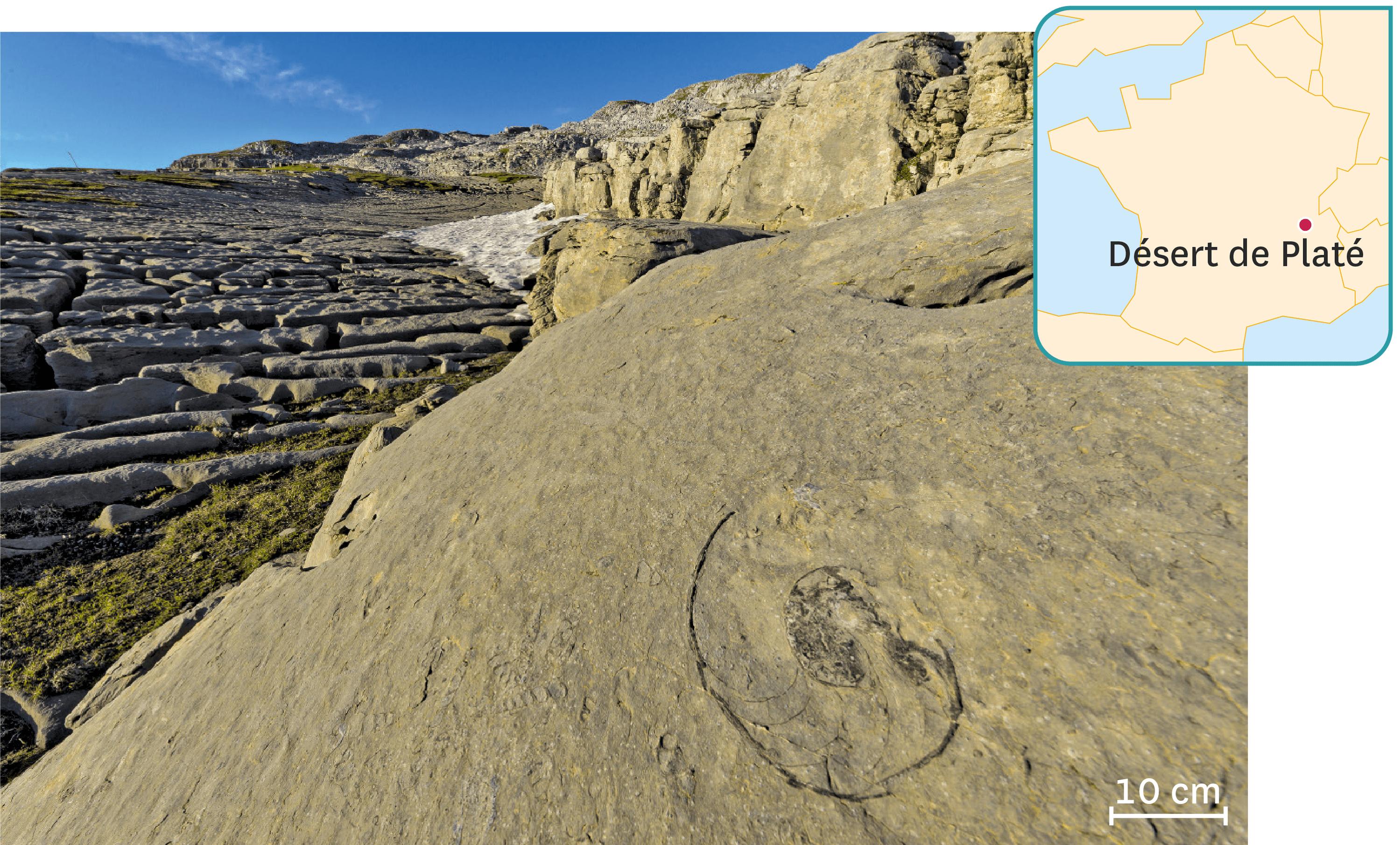Un fossile de nautile dans le désert du Platé, site naturel de Haute-Savoie.