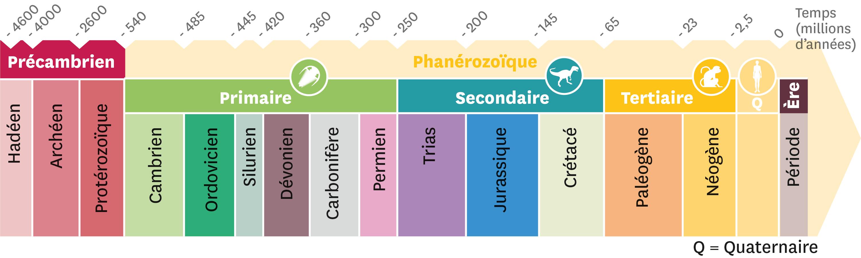 Le découpage du temps en ères et périodes géologiques.