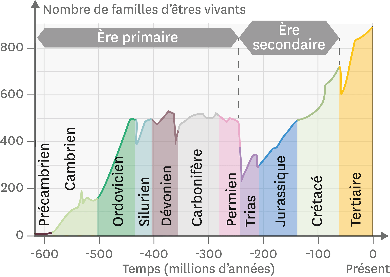 L'évolution de la diversité des familles marines au cours des temps géologiques.
