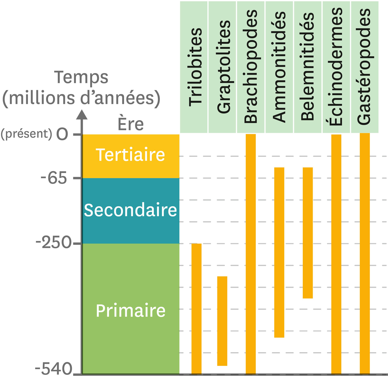 Une répartition de quelques fossiles marins au cours des temps géologiques.