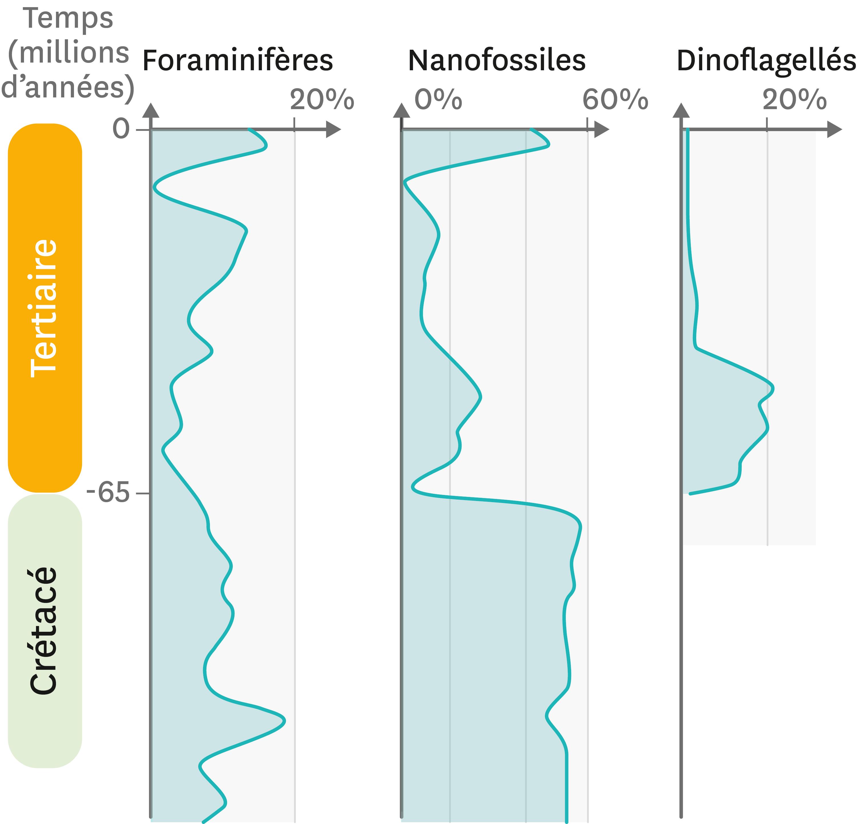 La fréquence de quelques fossiles microscopique dans les roches du site de Bidart en France, au niveau du Crétacé et du Tertiaire.