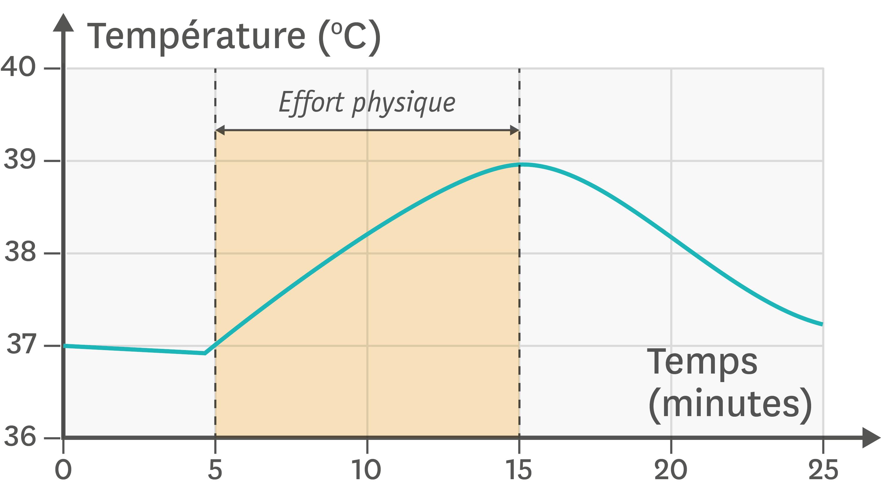 Les variations de la température corporelle en fonction du temps et de l'activité.