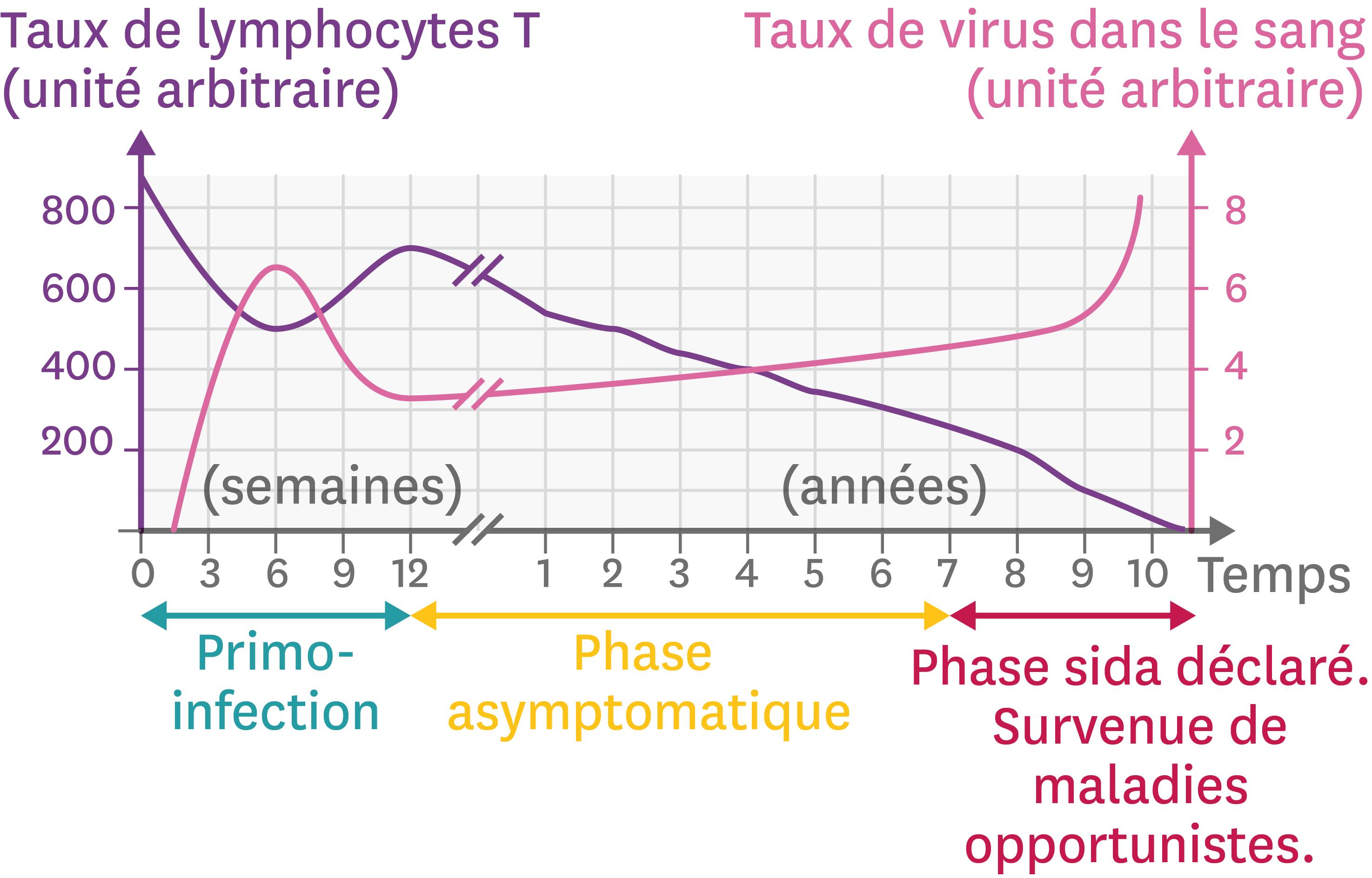 L'évolution de l'infection par le VIH en fonction du temps.