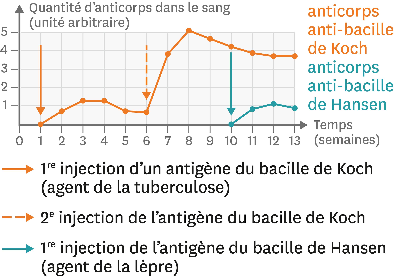Les variations de la quantité d'anticorps dans le sang après différentes injections.