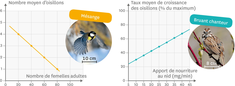 L'influence de la disponibilité en nourriture sur la croissance des oisillons.