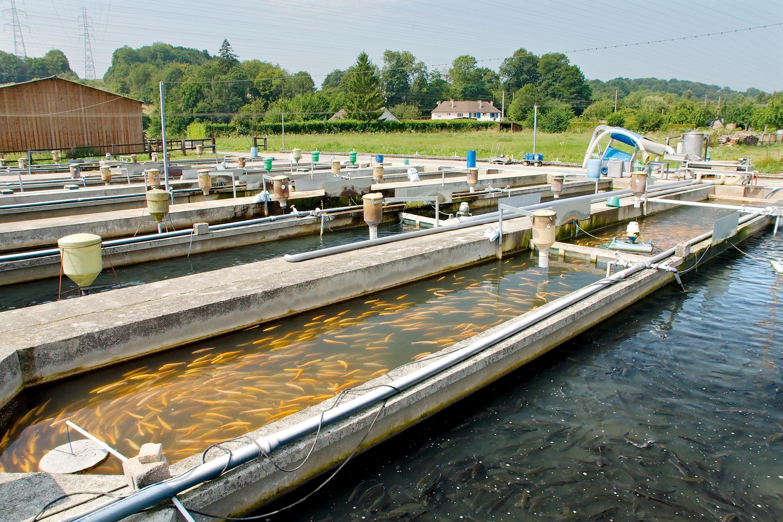 Les bassins de pisciculture de la Calonne.