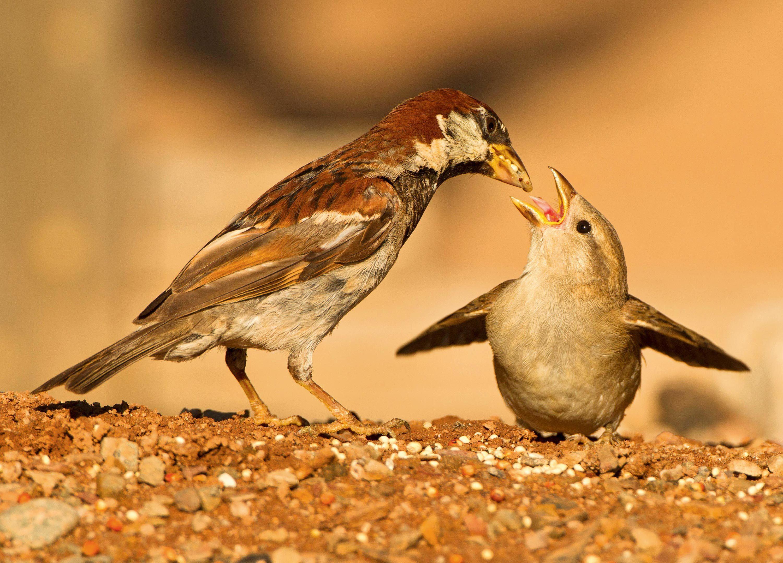 Un parent subvient aux besoins de son petit.