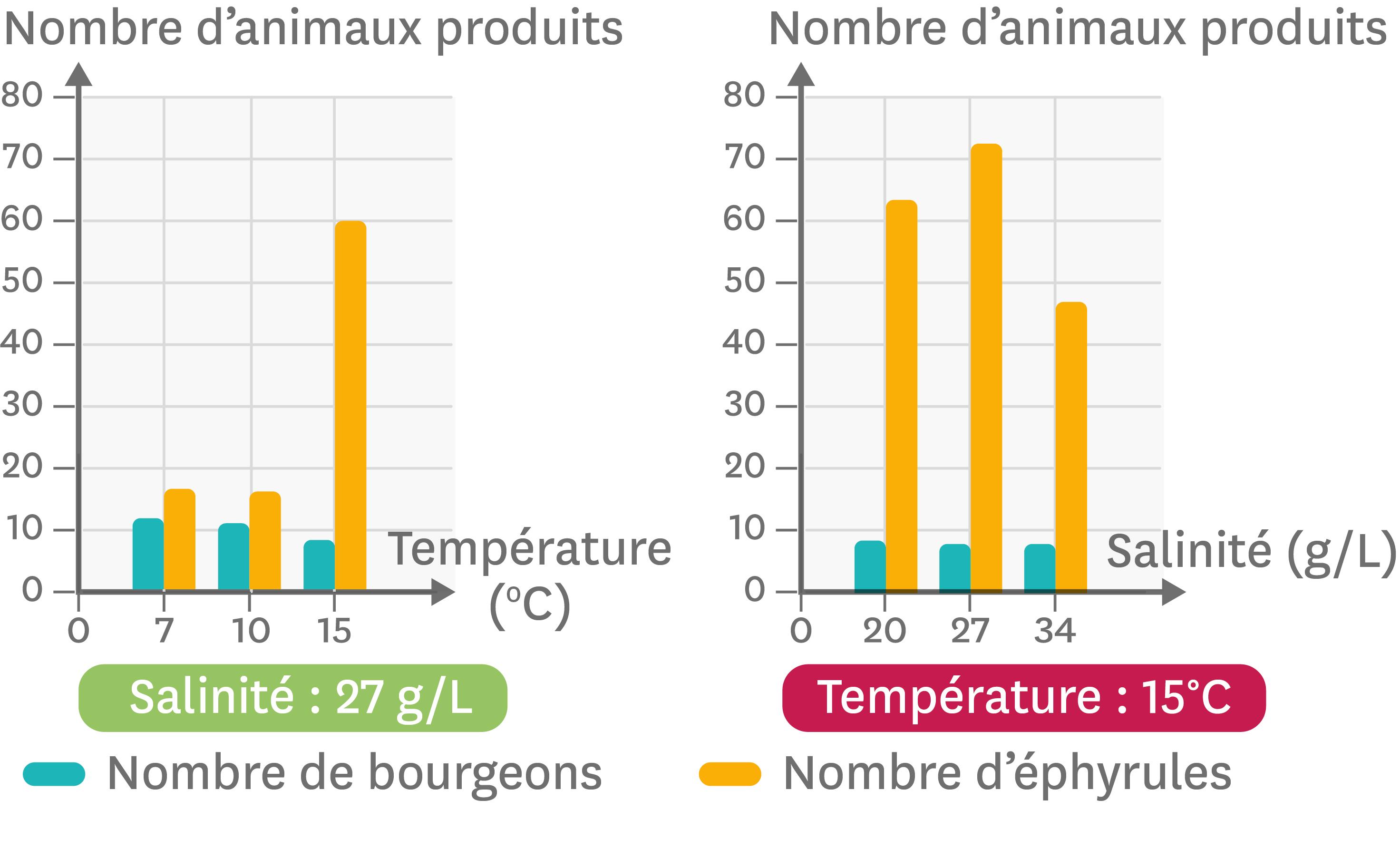 Les variations du nombre de bourgeons et d'éphyrules en fonction de la température et de la salinité du milieu.