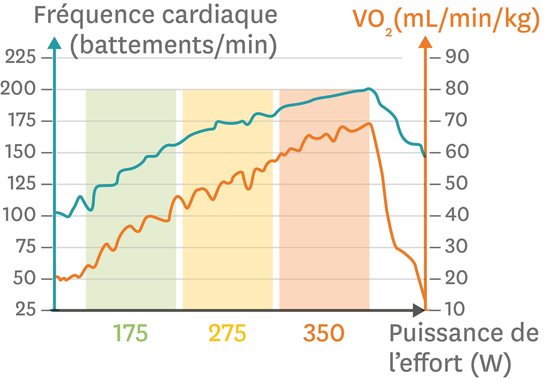 Les variations de la fréquence cardiaque et de la consommation de dioxygène pour un effort physique d'intensité croissante.