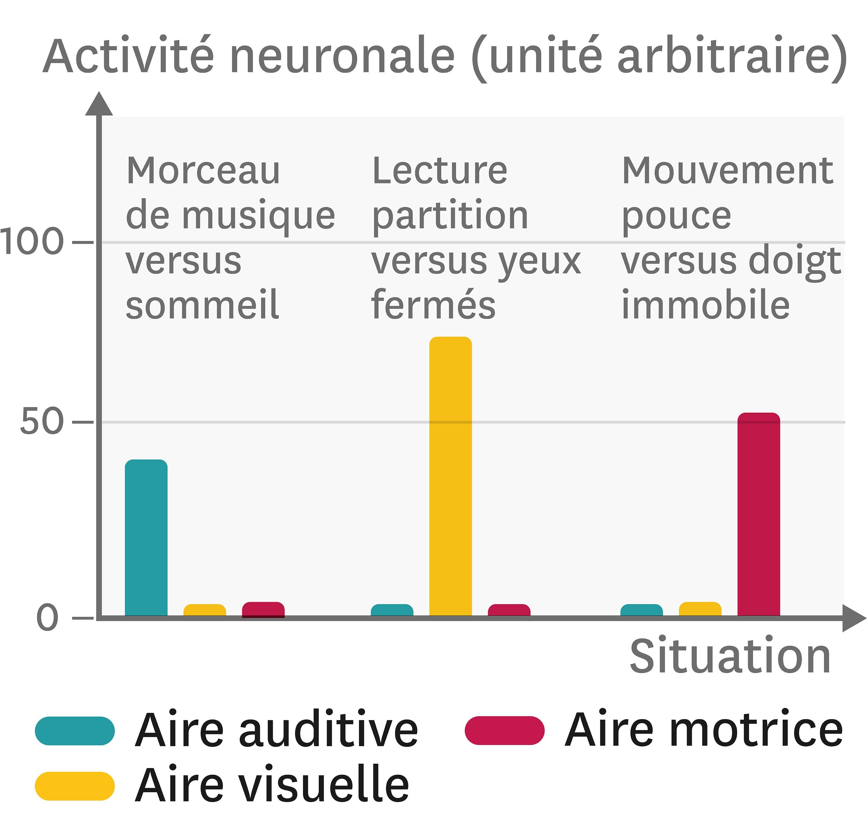 L'activité des neurones dans différentes zones cérébrales.