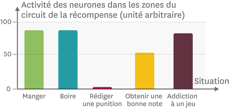 L'activité des neurones du circuit de la récompense.