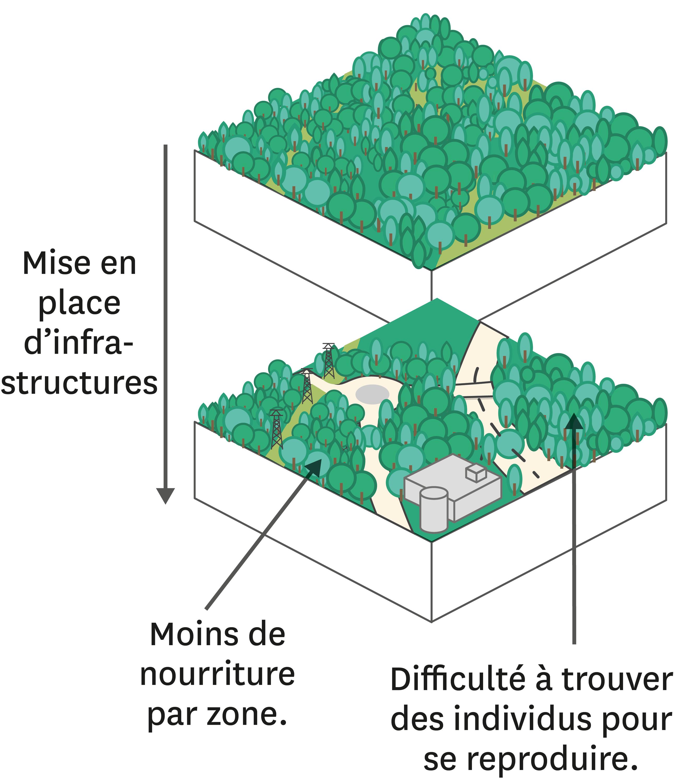 La fragmentation d'un écosystème forestier suite aux aménagements par l'Homme.