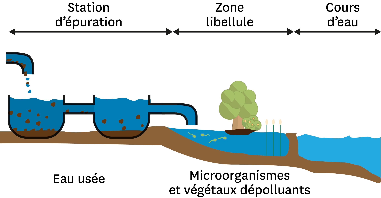 Une zone humide artificielle entre une station d'épuration et un cours d'eau.