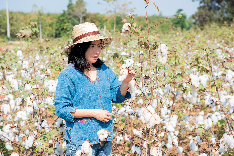 Un champ de coton en Ouzbékistan.