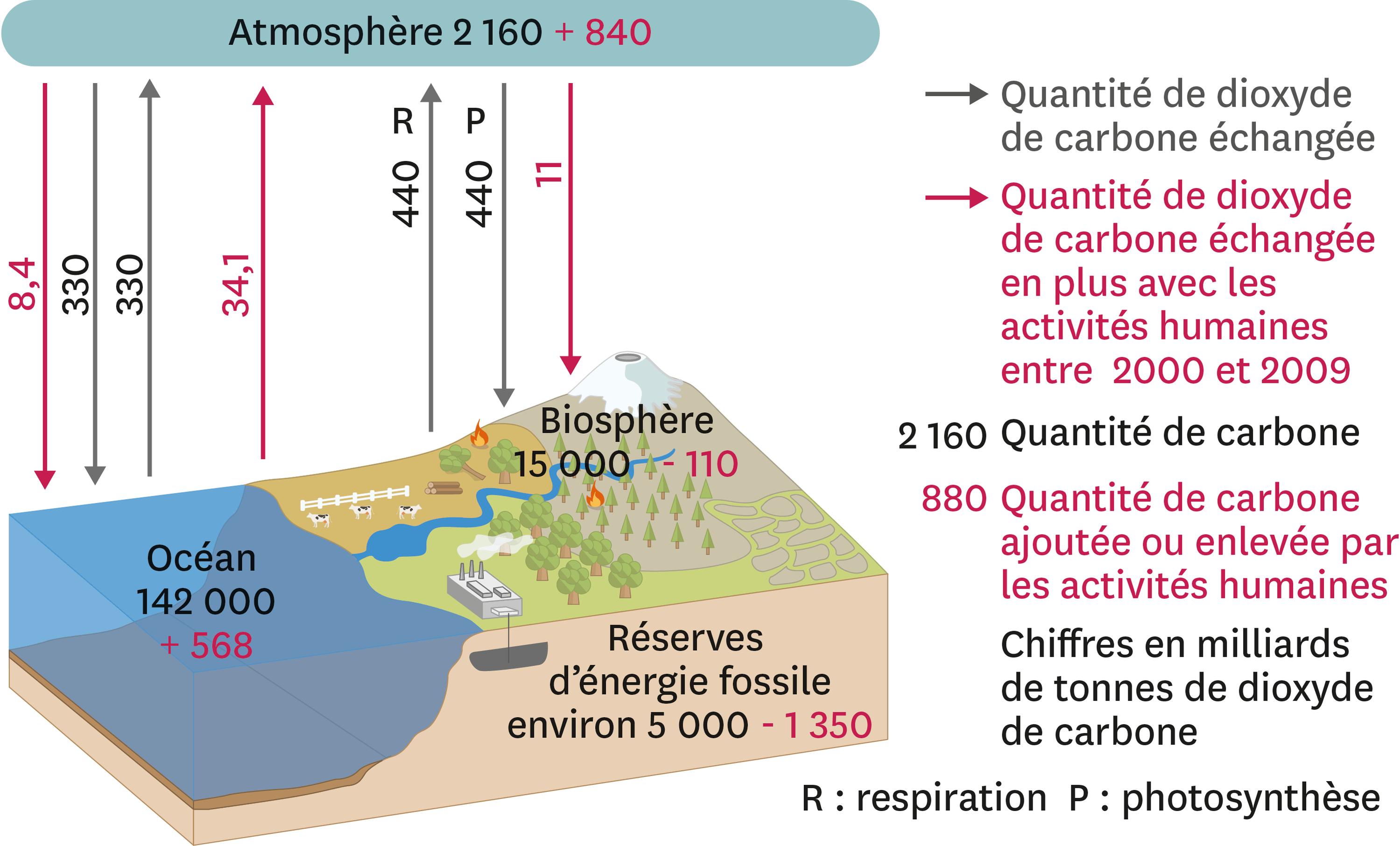 Cycle simplifié du dioxyde de carbone depuis 2000.