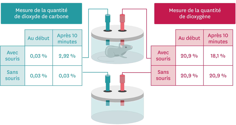 Les mesures des échanges gazeux chez une souris.