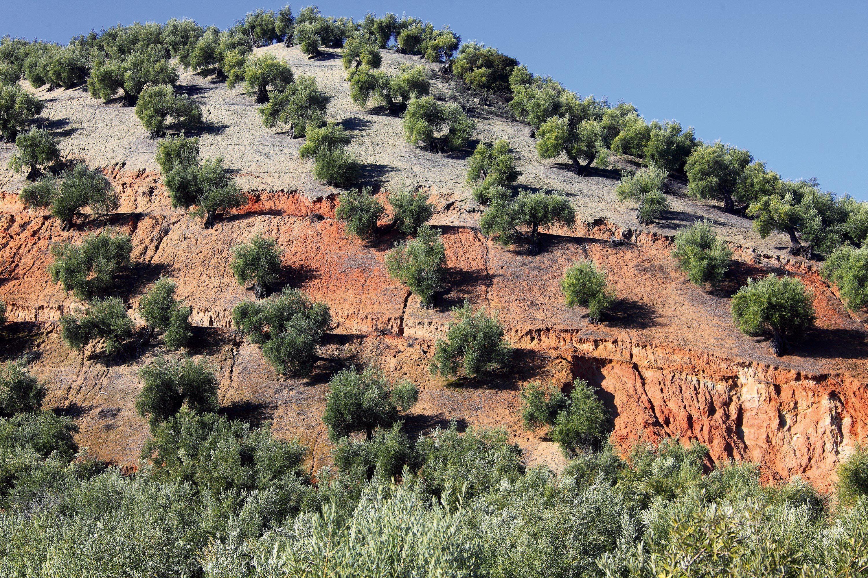 Un exemple de sol dégradé par le ruissellement de l'eau.