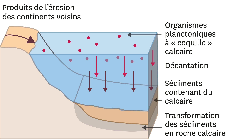 La formation du calcaire.