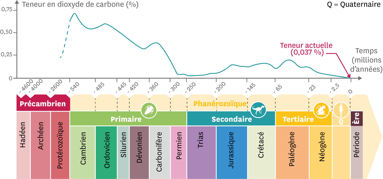 Les variations de la concentration de dioxyde de carbone atmosphérique au cours des temps géologiques.