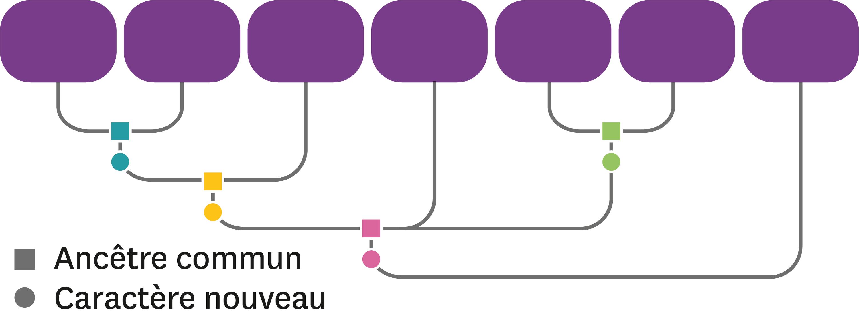 L'arbre de parenté de quelques espèces végétales actuelles et fossiles à compléter.