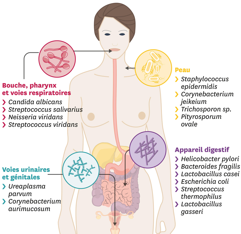Quelques microorganismes à la surface de notre corps.
