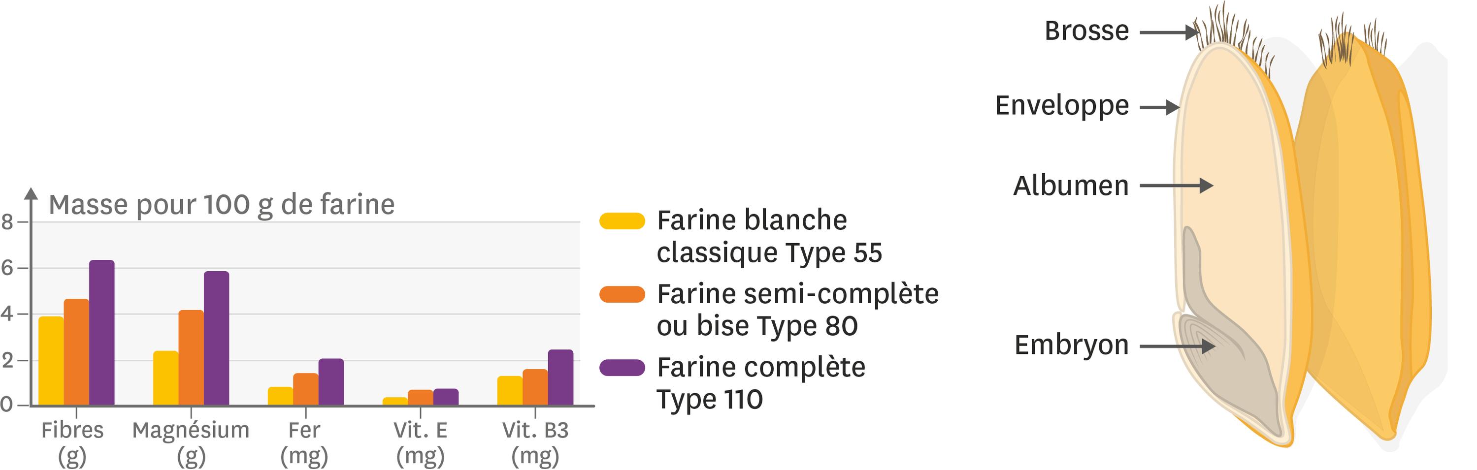 Teneur en fibres, vitamines et minéraux en fonction du type de farine et composition d'un grain de blé.